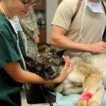【動物の医者の収入は?】獣医師の給料と平均年収
